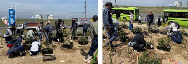 Acorn Tree-Planting Event